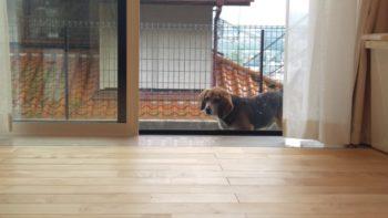広島市安佐南区 建築設計事務所 かんくう建築デザイン 愛犬1