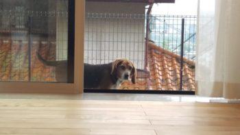 広島市安佐南区 建築設計事務所 かんくう建築デザイン 愛犬2