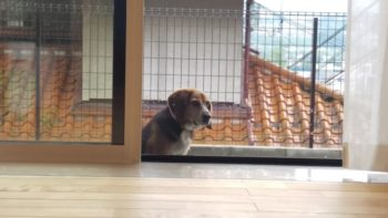 広島市安佐南区 建築設計事務所 かんくう建築デザイン 愛犬3
