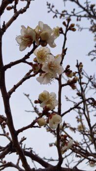 広島市安佐南区 建築設計事務所 かんくう建築デザイン 白花