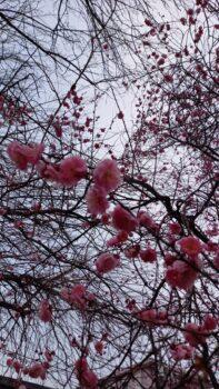 広島市安佐南区 建築設計事務所 かんくう建築デザイン 赤花