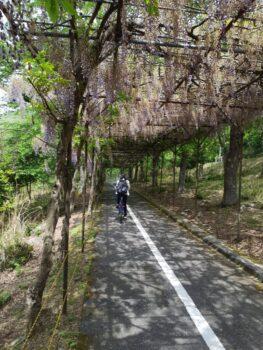 サイクリング~広島の建築設計ブログ~